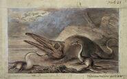 Ichthyosaurus-plesiosaurus-8621227