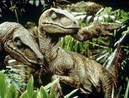 JP-Velociraptors a6b9