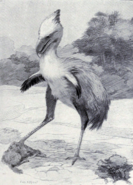 Life restoration of Phorusrhacos by Charles Knight