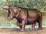 Hexaprodoton sivalensis