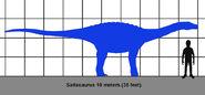 Saltasaur size