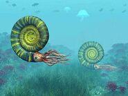 Middle-jurassic-ammonites-walter-myers