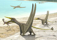 Rhamphorhynchus compsognathus by paleopeter d8ct991-fullview
