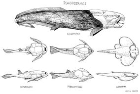 Placoderms by paleoaeolos