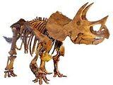 Ceratopsidae