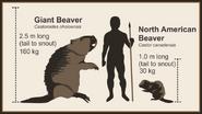 Giant-beaver-size-comparison