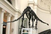 Mamenchisaurus 1