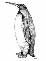 Palaeeudyptes