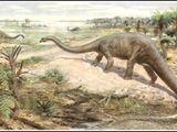 Diplodocus/Gallery