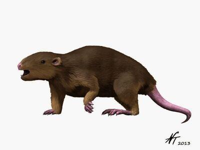 Meniscoessus NT