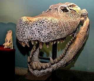 320 x 275 jpeg 12kBPurussaurus