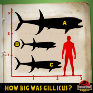 Gillicus size quiz