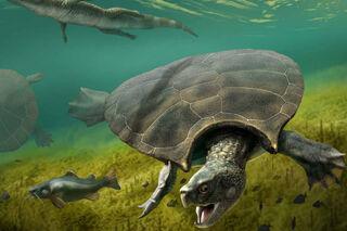 Massive-Prehistoric-Turtle