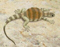1280px-Eunotosaurus africanus.jpg