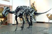 Iguanodonbones