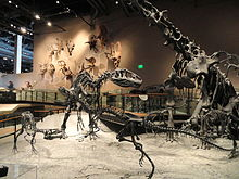 Fossil displays - Natural History Museum of Utah - DSC07215