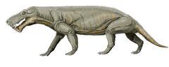 Gorgonops whaitsii1.jpg