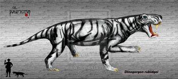 Dinogorgon rubidgei