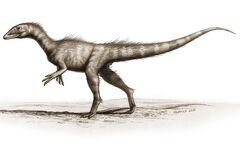 Dracoraptor.jpg