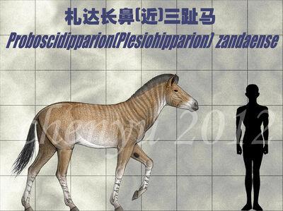 Proboscidipparion