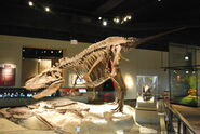 Field Museum Daspletosaurus