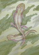 Leptoropha novojilovi