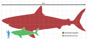 Megalodon-scale
