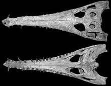 250px-Eosuchus