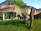 Allosaurus/Gallery