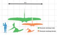 220px-Geosternbergia scale