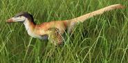 Velociraptor mongoliensis (Sand Peregrine)