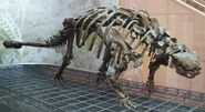 Euoplocephalus tutus skeleton