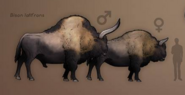 Maleandfemalebisoninprehistorickingdom