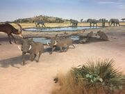 Cape Warthogs, Botswana Diorama, Denver Museum of Nature and Science (Middle).jpg