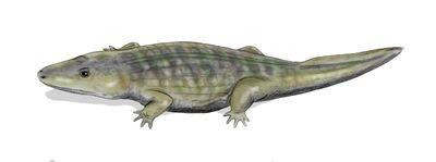 Wetlugasaurus_BW.jpg