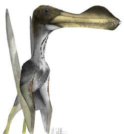 Coloborhynchus.jpg