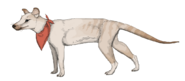 The domesticated thylacine by sheather888 d9popuu-fullview