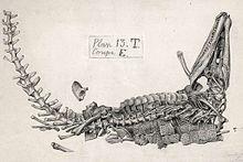220px-Gustave Lavalette; Goniopholis