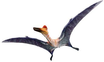 PterodactylusInfobox