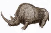Wooly Rhino15