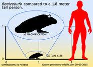 Beelzebufo-size