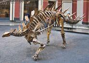 Berlin Naturkundemuseum Dino Eingangshalle