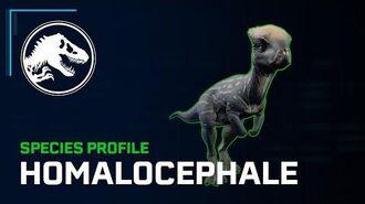 Species Profile - Homalocephale