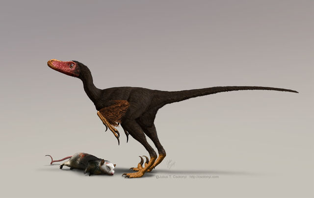 File:Bambiraptor w turkey vulture colours for web-based news releases only Julius Csotonyi.jpg