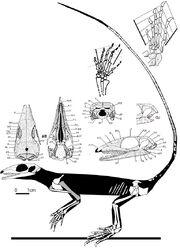 Milleropsis pricei skeleton
