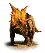 XenoceratopsJC