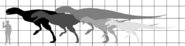 Carnotaurini sizes