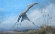 Hatzegopteryx begins to take flight