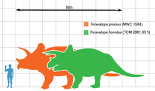 Triceratops scale