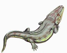 220px-Rhinesuchus1DB.jpg